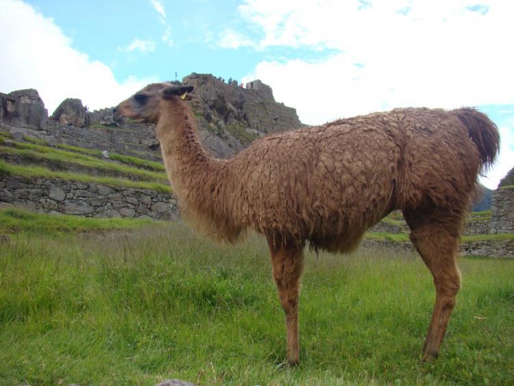 Peru (7)